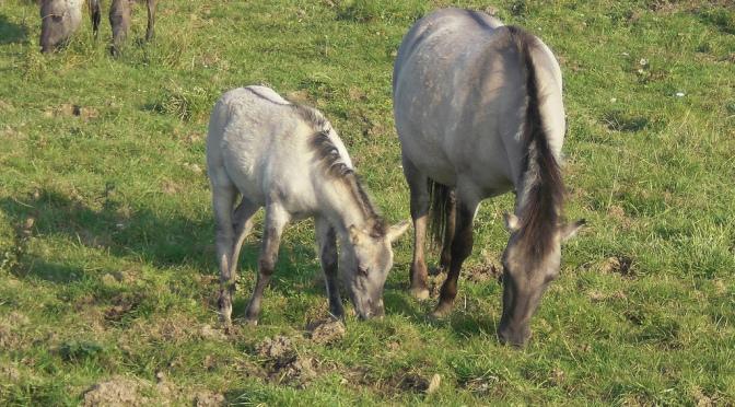 Horses for Coarses