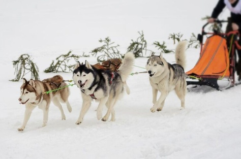 winter-sports-blog-dog-sled