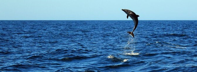 Discover Dolphins off Scotland's Beautiful Coastline